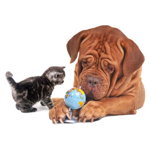 Wie lange dauert die Lieferung meiner petWALK Tiertüre?