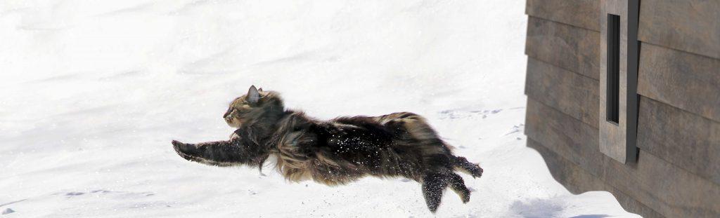 petWALK door cat snow