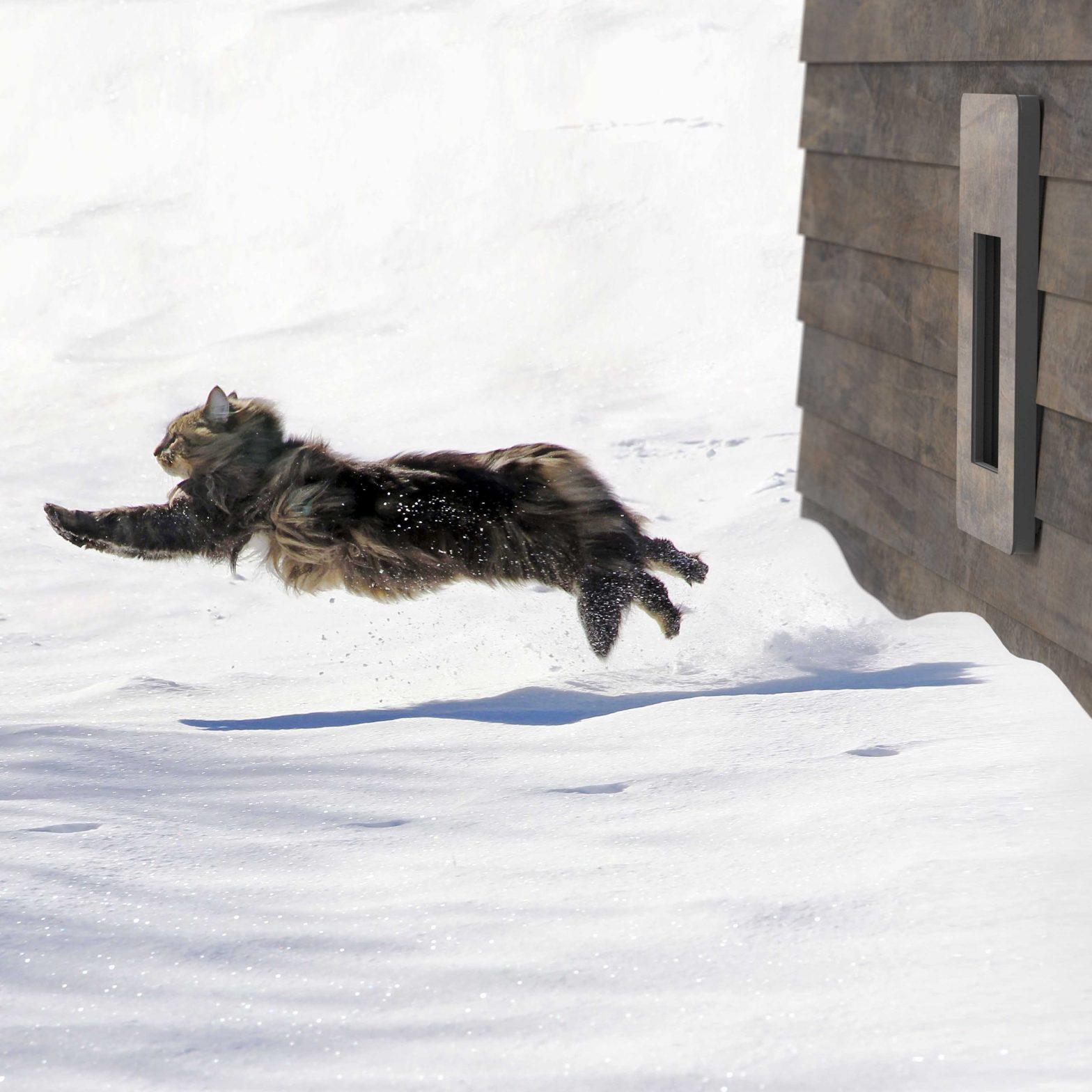 petWALK Tiertüre bei Winter Schnee